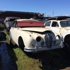 Jaguar Heaven Yard 15
